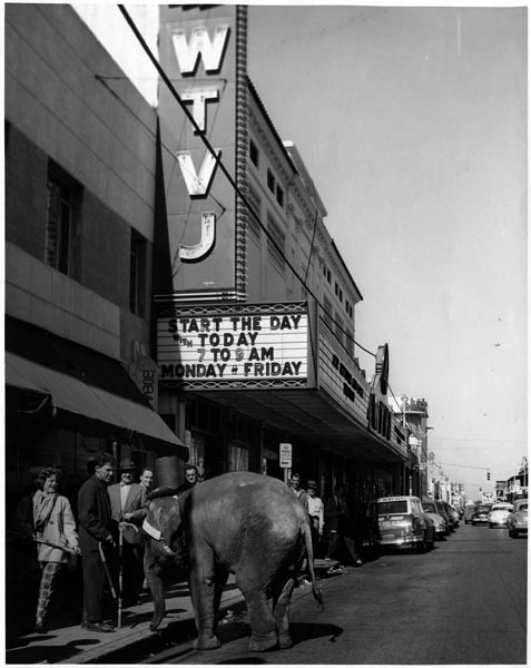 A group of onlookers with an elephant outside of WTVJ's downtown Miami studio, c. 1956 (HistoryMiami)